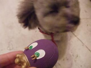 犬のおもちゃたまごちゃんサンジョルディスペインラテックスゴムランコおすわりくんグリニーズ犬のおやつフントヒュッテビション東京トリミング文京区a.jpg
