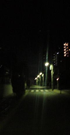 2011賀正初詣年賀状卯年うさぎ年hundehutteフントヒュッテビションフリーゼブリーダー東京アフロカット文京区トリミングビションカット安田美沙子はんな先輩犬泉くん.jpg