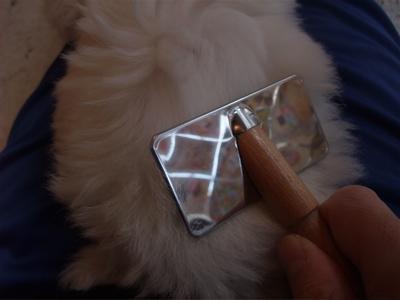 ローレンススリッカーブラシブラッシングビションフリーゼ日頃のお手入れコームコーミングトリミング文京区フントヒュッテオリジナルリード犬グッズ首輪3.jpg