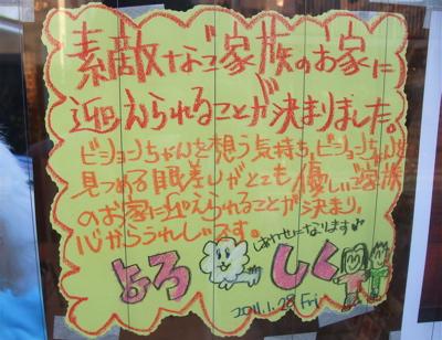 ビションフントヒュッテ東京ビションフリーゼブリーダービションカット文京区トリミングフントヒュッテオリジナルカフェリードカラー犬首輪犬グッズhundehutte2.jpg