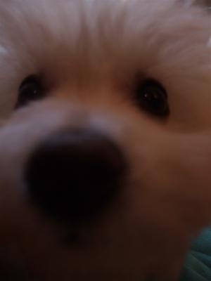 ビションフントヒュッテ東京ビションフリーゼブリーダービションカット文京区トリミングフントヒュッテオリジナルカフェリードカラー犬首輪犬グッズhundehutte5.jpg