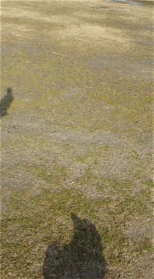 荒川の土手犬おさんぽケーズデンキ荒川区フントヒュッテオリジナルハーネスリード犬首輪東京ビションフリーゼブリーダービションカット文京区トリミング5.jpg