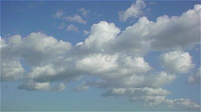 荒川の土手犬おさんぽケーズデンキ荒川区フントヒュッテオリジナルハーネスリード犬首輪東京ビションフリーゼブリーダービションカット文京区トリミング6.jpg