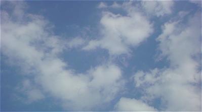 荒川の土手犬おさんぽわんこケーズデンキ荒川フントヒュッテリードドッググッズ首輪東京ビションフリーゼブリーダービションカット文京区トリミング2.jpg