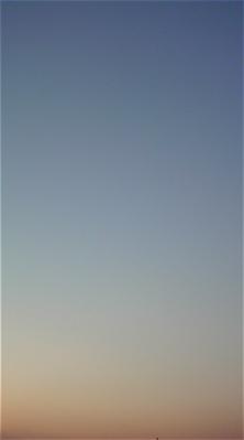 荒川の土手犬おさんぽわんこケーズデンキ荒川区計画停電hundehutteフントヒュッテ東京ビションフリーゼブリーダー子犬情報こいぬビションカット文京区トリミング9.jpg