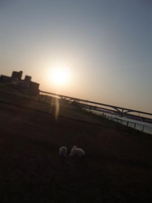 フントヒュッテ東京ビションフリーゼブリーダービションカット文京区トリミングhundehutteはんな先輩安田美沙子天才!志村どうぶつ園荒川の土手犬おさんぽ26.jpg