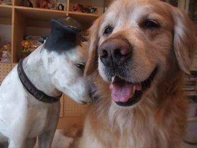 ゴールデン・レトリーバーシャンプー文京区ゴールデンレトリーバートリミングゴールデンカットフントヒュッテ東京ビションフリーゼこいぬ情報子犬hundehutte7.jpg