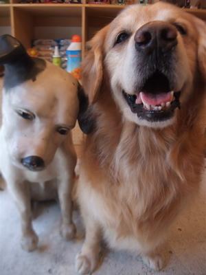 ゴールデン・レトリーバーシャンプー文京区ゴールデンレトリーバートリミングゴールデンカットフントヒュッテ東京ビションフリーゼこいぬ情報子犬hundehutte9.jpg