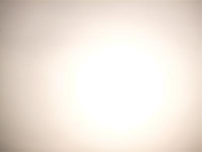 神宮外苑いちょう祭り外苑いちょう並木銀杏犬さんぽわんことおさんぽ表参道イルミネーション東京フントヒュッテビションフリーゼビションカットトリミング文京区7.jpg