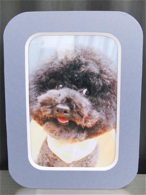 お誕生日犬バースデーケーキ東京フントヒュッテビションフリーゼトリミング文京区ノーフォークテリアブリーダーこいぬ子犬hundehutteプードルアフロカット.jpg