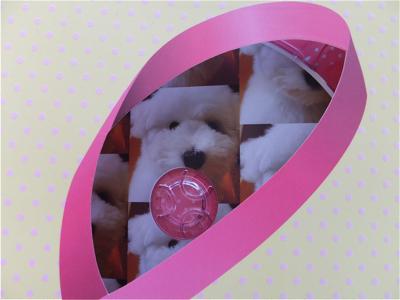 フントヒュッテビションフリーゼ東京ノーフォークテリア子犬hundehutteビションフリーゼトリミング文京区ビションカットビションフリーゼこいぬ子犬情報出産情報3.jpg