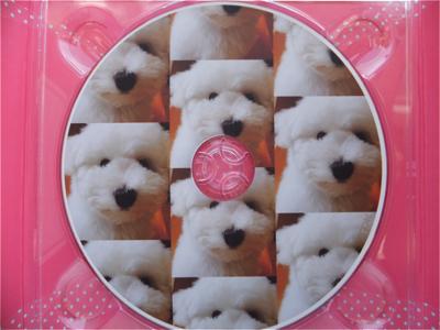 フントヒュッテビションフリーゼ東京ノーフォークテリア子犬hundehutteビションフリーゼトリミング文京区ビションカットビションフリーゼこいぬ子犬情報出産情報5.jpg