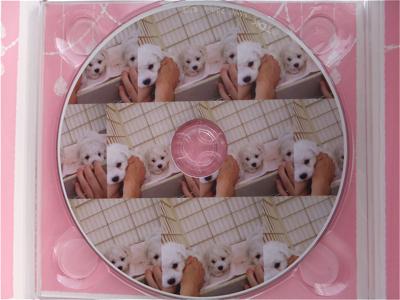 フントヒュッテビションフリーゼ東京ノーフォークテリア子犬情報hundehutteビションフリーゼトリミング文京区ビションカットビションフリーゼこいぬ子犬情報出産情報4.jpg