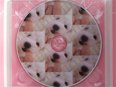 フントヒュッテビションフリーゼ東京ノーフォークテリア子犬情報hundehutteビションフリーゼトリミング文京区ビションカットビションフリーゼこいぬ子犬情報出産情報b.jpg