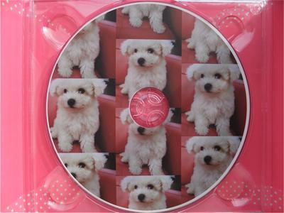 hundehutteビションフリーゼ東京ノーフォークテリア子犬フントヒュッテビションフリーゼトリミング文京区ビションカットビションフリーゼこいぬ子犬情報出産情報5.jpg