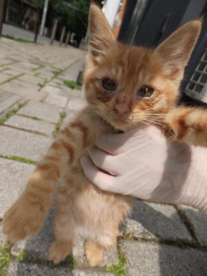 保護猫里親募集里親さん募集中野良猫迷子猫保護猫掲示板いつでも里親募集中東京フントヒュッテ文京区トリミングビションカットhundehutteノミダニ駆除予防フロントライン16.jpg