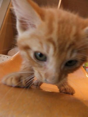 保護猫里親募集里親さん募集中野良猫迷子猫保護猫掲示板いつでも里親募集中東京フントヒュッテ文京区トリミングビションカットhundehutte猫シャンプー猫トリミング54.jpg