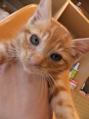 保護猫里親募集里親さん募集中野良猫迷子猫保護猫掲示板いつでも里親募集中東京フントヒュッテ文京区トリミングビションカットhundehutte猫シャンプー猫トリミング56.jpg
