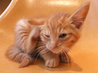 保護猫里親募集里親さん募集中野良猫迷子猫保護猫掲示板いつでも里親募集中東京フントヒュッテ文京区トリミングビションカットhundehutte猫シャンプー猫トリミング57.jpg