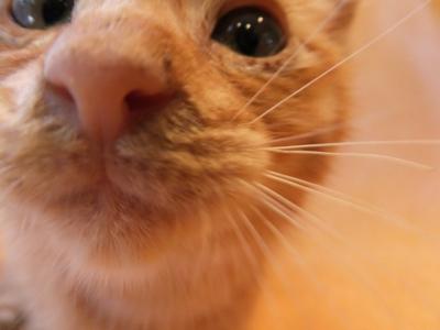 保護猫里親募集里親さん募集中野良猫迷子猫保護猫掲示板いつでも里親募集中東京フントヒュッテ文京区トリミングビションカットhundehutte猫シャンプー猫トリミング58.jpg