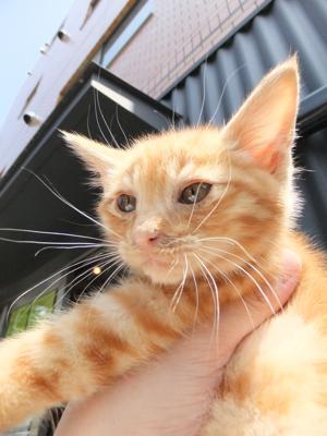 保護猫里親募集里親さん募集中野良猫迷子猫保護猫掲示板いつでも里親募集中東京フントヒュッテ文京区トリミングビションカットhundehutte猫シャンプー猫トリミング59.jpg