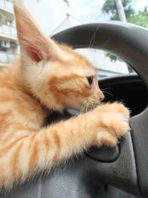 保護猫里親募集里親さん募集中野良猫迷子猫保護猫掲示板いつでも里親募集中東京フントヒュッテ文京区トリミングビションフリーゼカット猫トリミングhundehutte1.jpg