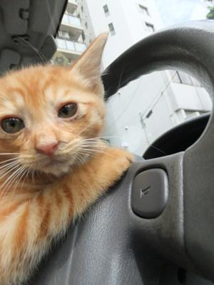 保護猫里親募集里親さん募集中野良猫迷子猫保護猫掲示板いつでも里親募集中東京フントヒュッテ文京区トリミングビションフリーゼカット猫トリミングhundehutte2.jpg