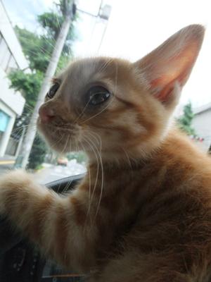 保護猫里親募集里親さん募集中野良猫迷子猫保護猫掲示板いつでも里親募集中東京フントヒュッテ文京区トリミングビションフリーゼカット猫トリミングhundehutte5.jpg