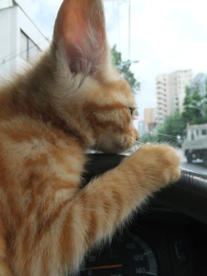 保護猫里親募集里親さん募集中野良猫迷子猫保護猫掲示板いつでも里親募集中東京フントヒュッテ文京区トリミングビションフリーゼカット猫トリミングhundehutte6.jpg