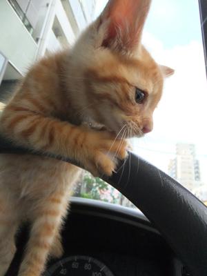 保護猫里親募集里親さん募集中野良猫迷子猫保護猫掲示板いつでも里親募集中東京フントヒュッテ文京区トリミングビションフリーゼカット猫トリミングhundehutte10.jpg