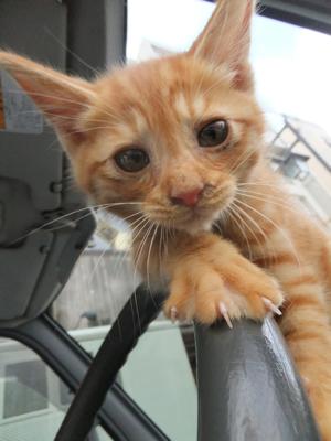 保護猫里親募集里親さん募集中野良猫迷子猫保護猫掲示板いつでも里親募集中東京フントヒュッテ文京区トリミングビションフリーゼカット猫トリミングhundehutte11.jpg