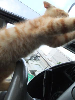 保護猫里親募集里親さん募集中野良猫迷子猫保護猫掲示板いつでも里親募集中東京フントヒュッテ文京区トリミングビションフリーゼカット猫トリミングhundehutte12.jpg