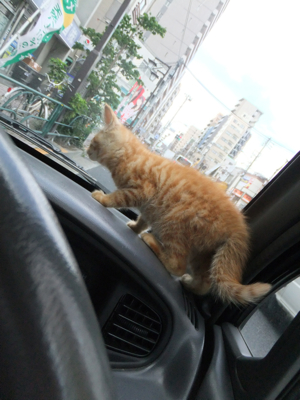 保護猫里親募集里親さん募集中野良猫迷子猫保護猫掲示板いつでも里親募集中東京フントヒュッテ文京区トリミングビションフリーゼカット猫トリミングhundehutte13.jpg