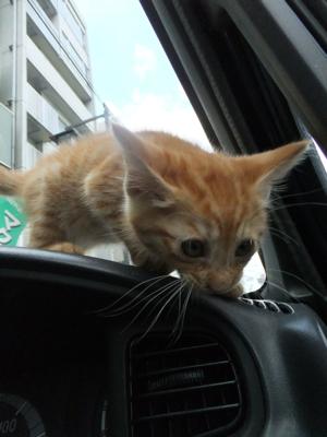 保護猫里親募集里親さん募集中野良猫迷子猫保護猫掲示板いつでも里親募集中東京フントヒュッテ文京区トリミングビションフリーゼカット猫トリミングhundehutte14.jpg