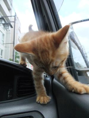 保護猫里親募集里親さん募集中野良猫迷子猫保護猫掲示板いつでも里親募集中東京フントヒュッテ文京区トリミングビションフリーゼカット猫トリミングhundehutte15.jpg