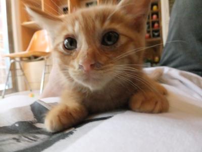 保護猫里親募集里親さん募集中野良猫迷子猫保護猫掲示板いつでも里親募集中東京フントヒュッテ文京区トリミングビションフリーゼカット猫トリミングhundehutte20.jpg