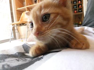 保護猫里親募集里親さん募集中野良猫迷子猫保護猫掲示板いつでも里親募集中東京フントヒュッテ文京区トリミングビションフリーゼカット猫トリミングhundehutte21.jpg