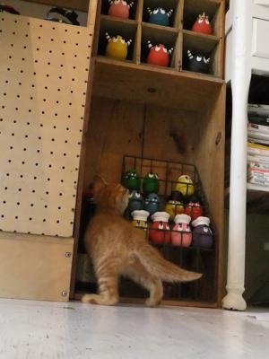 保護猫里親募集里親さん募集中野良猫迷子猫保護猫掲示板いつでも里親募集中東京フントヒュッテ文京区トリミングビションフリーゼカット猫トリミングhundehutte25.jpg