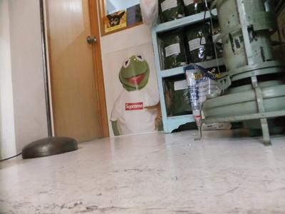 保護猫里親募集里親さん募集中野良猫迷子猫保護猫掲示板いつでも里親募集中東京フントヒュッテ文京区トリミングビションフリーゼカット猫トリミングhundehutte27.jpg