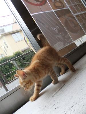 保護猫里親募集里親さん募集中野良猫迷子猫保護猫掲示板いつでも里親募集中東京フントヒュッテ文京区トリミングビションフリーゼカット猫トリミングhundehutte30.jpg