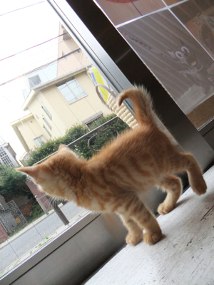 保護猫里親募集里親さん募集中野良猫迷子猫保護猫掲示板いつでも里親募集中東京フントヒュッテ文京区トリミングビションフリーゼカット猫トリミングhundehutte31.jpg