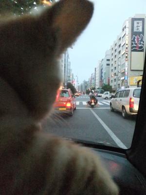 保護猫里親募集里親さん募集中野良猫迷子猫保護猫掲示板いつでも里親募集中東京フントヒュッテ文京区トリミングビションカット猫トリミングhundehutteマルクト小伝馬町4.jpg