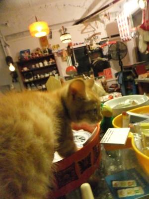 保護猫里親募集里親さん募集中野良猫迷子猫保護猫掲示板いつでも里親募集中東京フントヒュッテ文京区トリミングビションカット猫トリミングhundehutteマルクト小伝馬町8.jpg