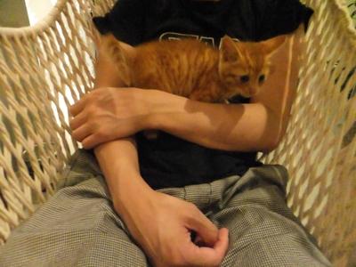 保護猫里親募集里親さん募集中野良猫迷子猫保護猫掲示板いつでも里親募集中東京フントヒュッテ文京区トリミングビションカット猫トリミングhundehutteマルクト小伝馬町10.jpg