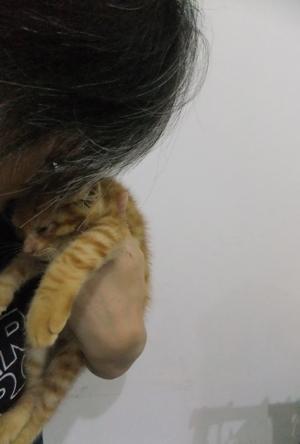 保護猫里親募集里親さん募集中野良猫迷子猫保護猫掲示板いつでも里親募集中東京フントヒュッテ文京区トリミングビションカット猫トリミングhundehutteマルクト小伝馬町14.jpg
