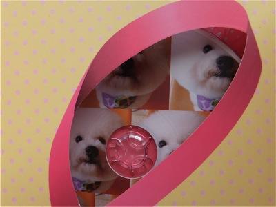 ビションフリーゼトリミング文京区ビションフリーゼカットフントヒュッテビションフリーゼ子犬情報東京hundehutteバースデープレゼントCDギフトケース5.jpg