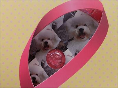 ビションフリーゼトリミング文京区ビションフリーゼカットフントヒュッテビションフリーゼ子犬情報東京hundehutteバースデープレゼントCDギフトケース6.jpg