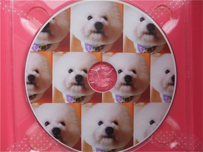 ビションフリーゼトリミング文京区ビションフリーゼカットフントヒュッテビションフリーゼ子犬情報東京hundehutteバースデープレゼントCDギフトケース9.jpg