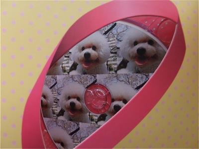 ビションフリーゼトリミング文京区ビションフリーゼカットフントヒュッテビションフリーゼ子犬情報東京hundehutteバースデープレゼントCDギフトケース12.jpg