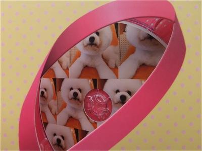 ビションフリーゼトリミング文京区ビションフリーゼカットフントヒュッテビションフリーゼ子犬情報東京hundehutteバースデープレゼントCDギフトケース14.jpg